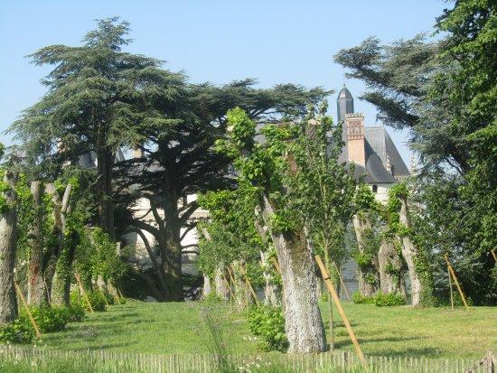 Le Jardin du Château 5