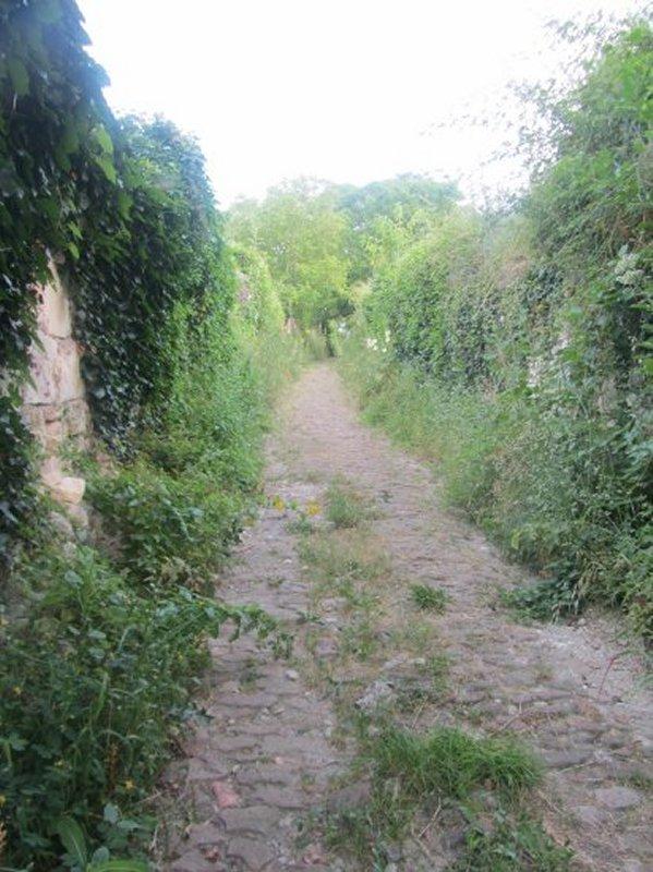 Chemin Pavé pour Atteindre les Vignes à la sortie de Montsoreau