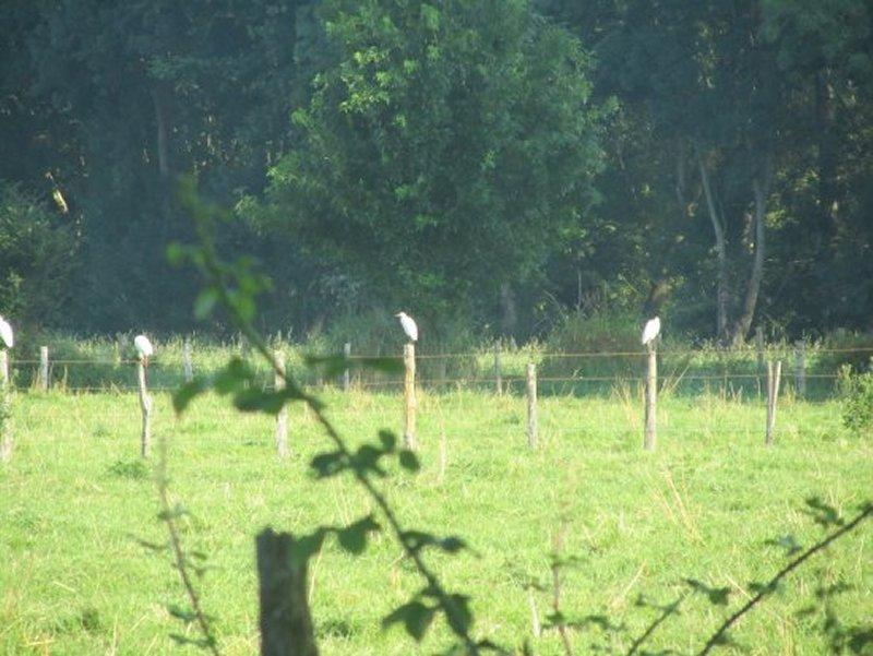 Oiseaux Perchés