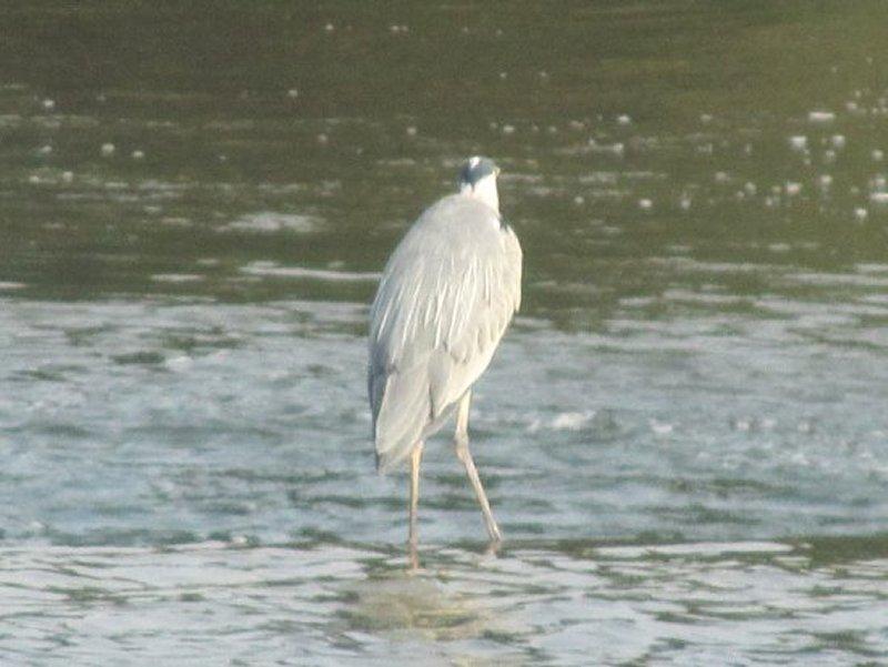 Oiseau Sur Le Cher à Savonnières