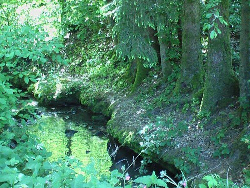 La Saône près de sa Source