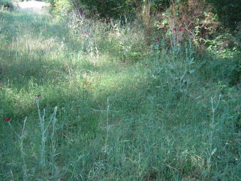 La Végétation des Etangs