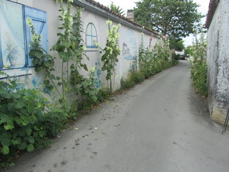 Une Venelle à Saint Xandre et ses Roses Trémières