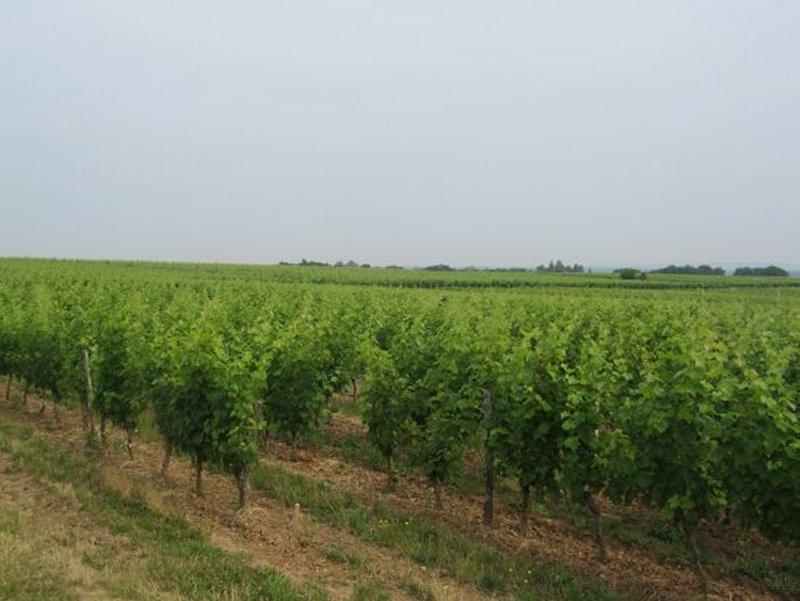 Le Vignoble de Saumur Champigny