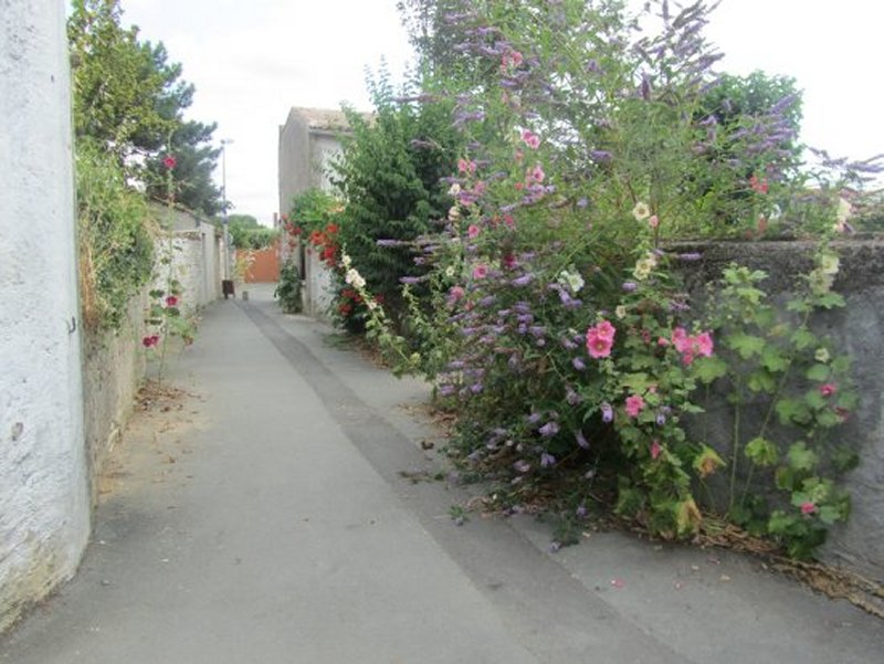 Et Encore des Roses Trémières à Saint Xandre