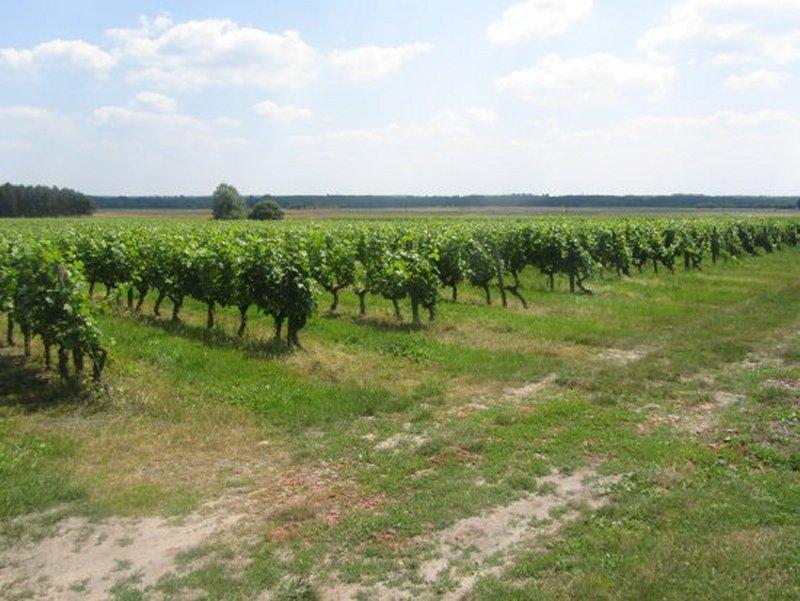 Les Premières Vignes du Vin de Loire